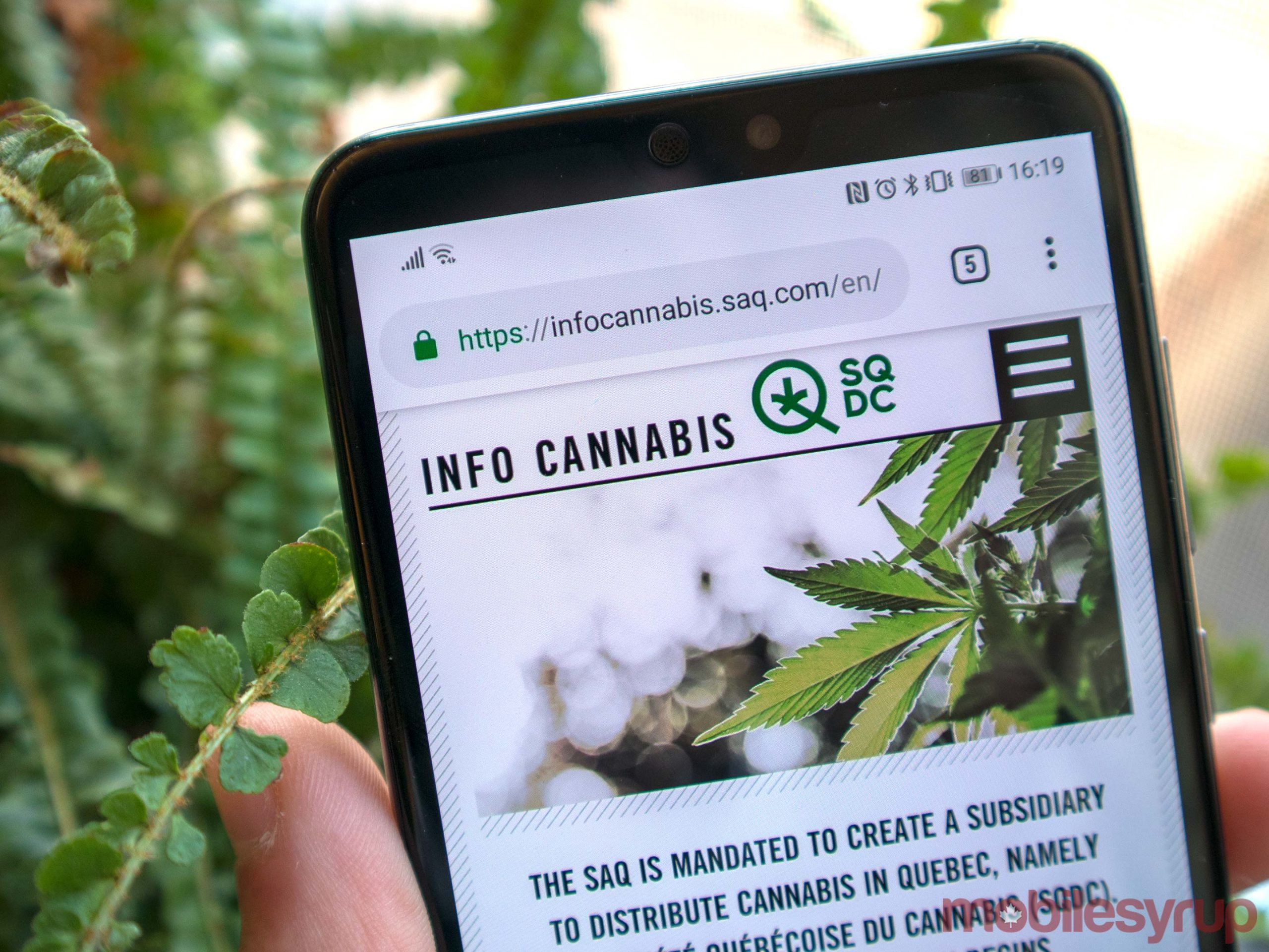 The Benefits Of Buying Weed Online