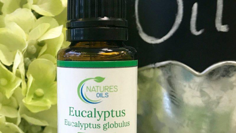 Uses Of Eucalyptus Essential Oil